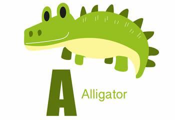 26个英文字母、动物认