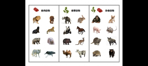 动物,昆虫运动方式分类游戏图片